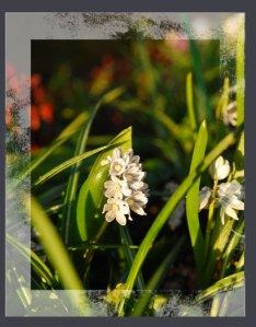Blumenmadchen-flower-1