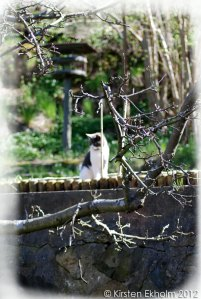 Appletree-late-bloom-20120502